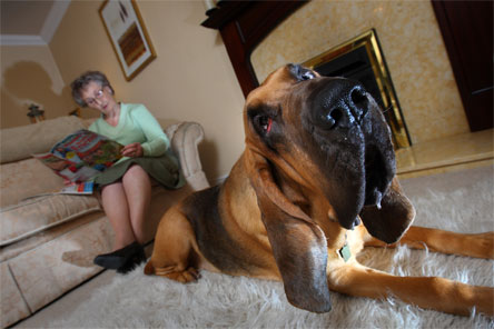 Woman sits in her house with her dog